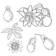 Passion Flower. Floral Elements In Sketch Style. Line Style. Isolated On White Background.