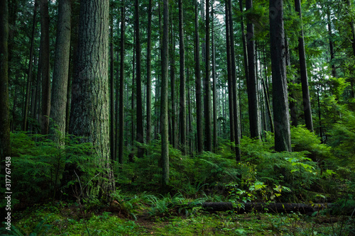 View of trees in forest - 317767458
