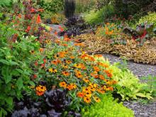 A Fall Garden With 'Profusion ...