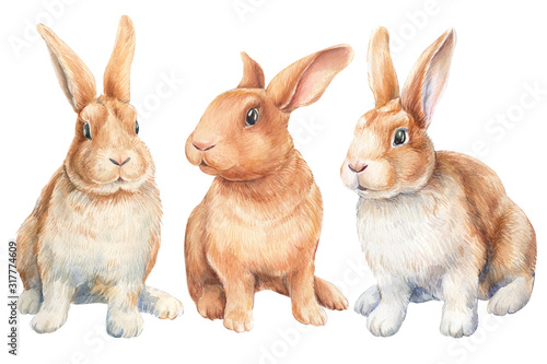 Photo set of bunnies on an isolated white background, watercolor illustration, cute animal, easter bunny