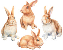 Set Of Bunnies On An Isolated ...