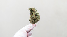 Checking The Quality Of Marijuana Buds In The Male Hand. Quality