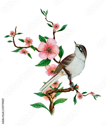 Photo Watercolor illustration with one beautiful bird sitting on a flowering branch of cherry