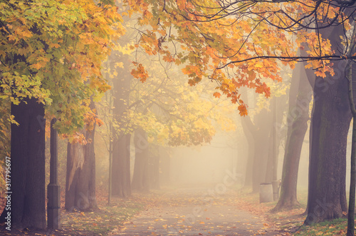 Autumn foggy colorful tree alley in the park on a misty day in Krakow, Poland Wallpaper Mural