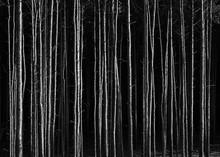 Full Frame Shot Of Tree Trunks In Forest At Night