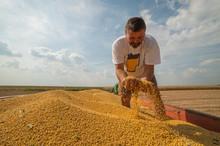 Satisfied Farmer After Soybean...