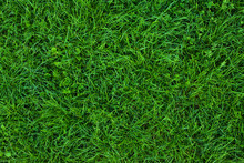 Long Not Cutted Lawn Texture. ...