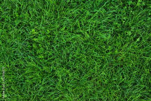 Tela Long not cutted lawn texture