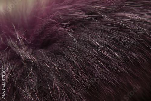 Fényképezés arctic polar fox fur on a lilac or purple collar
