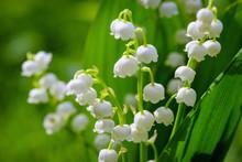 Flower Spring Sun White Green ...
