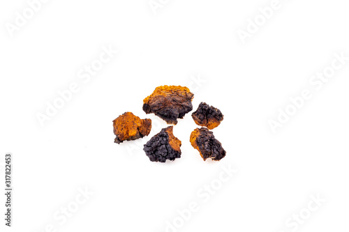 Photo Chaga mushroom close-up isolated on a white background, medicinal mushroom grows