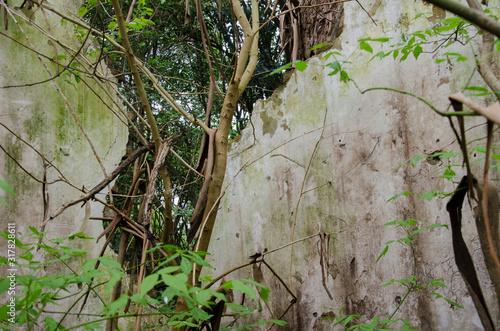 Broken wall of a ruined house invaded by wild plants Tapéta, Fotótapéta