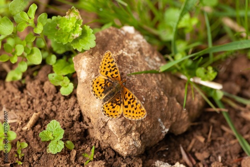 Beautiful yellow butterfly on a rock surrounded by green plants