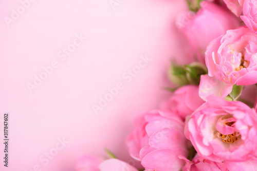 Obraz Beautiful pink roses blooming on pink background with copy space - fototapety do salonu