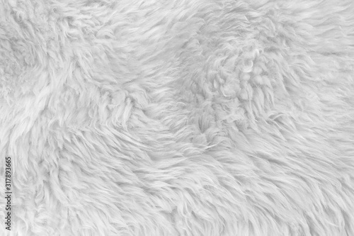 Obraz White real wool with beige top texture background. light cream natural sheep wool.  seamless plush cotton, texture of fluffy fur for designers - fototapety do salonu