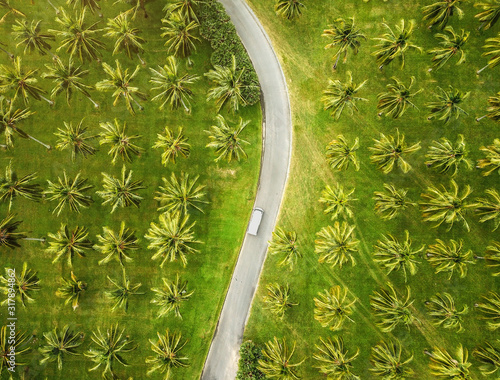 Valokuvatapetti Aerial view of a coconut plantation, Cairns, Australia