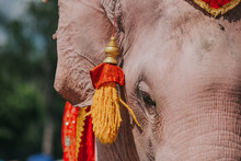 Details Of Elephant On Chains....