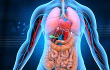 Human Anatomy On Blue Backgrou...