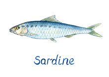 Sardine, Hand Painted Watercol...