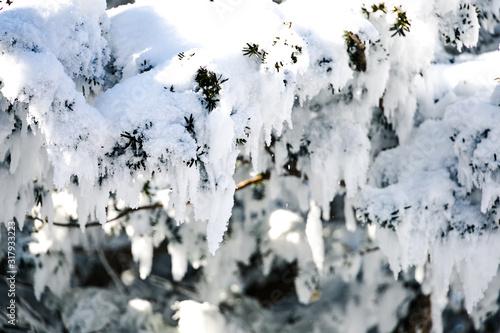 Cuadros en Lienzo Have a beautiful winter