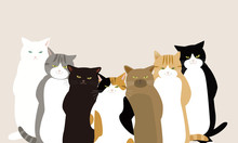 ハードボイルドを気取る 無愛想な顔の7匹の猫