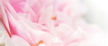 Bannière Pétales De Fleur