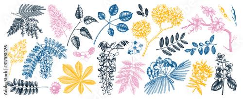 Obraz na plátně Vector set of spring trees in flowers illustrations in color