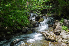 Landscape Wild Forest Mountain River With Rapids