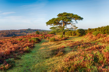 Bratley View In The New Forest