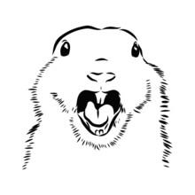 Screaming Gopher Portrait, Sketch