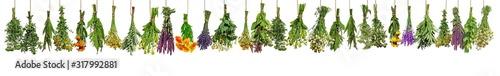 Obraz Verschiedene frische Heilkräuter in Bündeln hängen zum Trocknen - fototapety do salonu