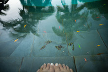 Feet In The Water Of A Live Fi...
