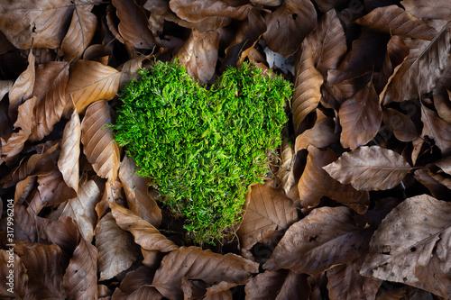 coeur en mousse vert  sur des feuilles Canvas Print