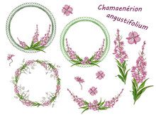 Set Of Round Frames, Wreaths, Floral And Floral Elements Of Narrow-leaved Fireweed Flowers