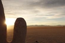 Salt Cactus. Salinas Grandes (...
