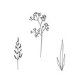 Hand-drawn illustration. Set of simple wild grass, twigs. Sketch, black lines on a white background. For modern decor.