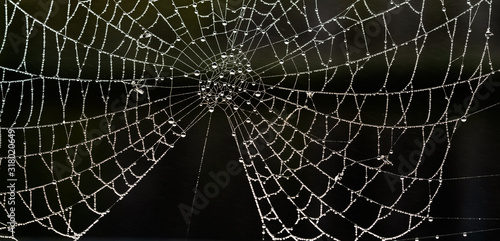 Spider's web covered in water droplets Wallpaper Mural