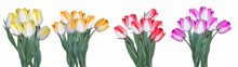 Multicolored Tulips Bunches In Yellow, Orange, Red And Pink Isolated On White Background Panorama Banner Long