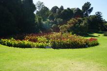 Plants In Royal Botanic Garden...