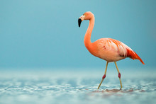 Side View Of Bird In Lake