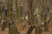 Jüdischer Friedhof Am Zentralfriedhof - Vienna