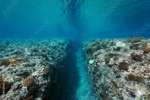 Rocky reef eroded by the swell, a trench on the ocean floor, underwater seascape, Pacific ocean, French Polynesia #318059469