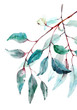 canvas print picture Beautiful watercolor tropical leaves painted on white paper, top view