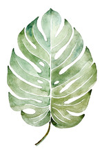 Beautiful Watercolor Tropical Leaf Painted On White Paper, Top View