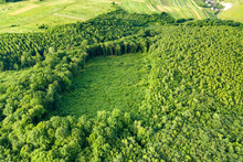 Top Down Aerial View Of Green ...