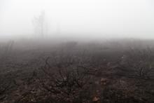 Moody, Misty, Sad View Of Burn...