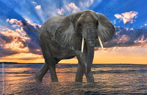 Black elephant on the beach Blue sky Wallpaper Mural