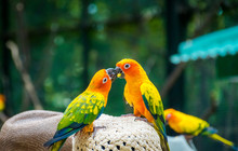 Close-Up Of Parakeets Perching...