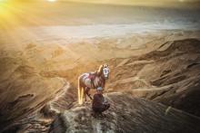 Man Sitting By Horse On Mounta...
