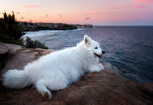 Happy Dog By The Sea At Sunset...